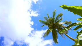 Background cloud and coconut banana plant Stock Photo