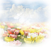 Background With  Clouds And Tulips Royalty Free Stock Photography