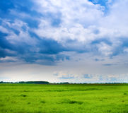 Background of cloudy sky and fresh green grass Stock Photography
