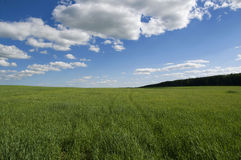 Background of cloudy sky and grass Stock Photo
