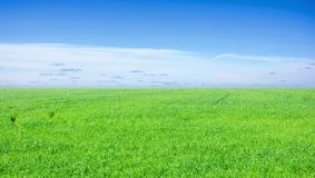 Background of cloudy sky and grass Stock Photography