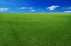 Sky and grass background Stock Images