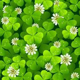 Background clover. Seamless natural clover background with flowers Royalty Free Stock Images