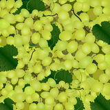Background of a cluster of green grapes Stock Photo