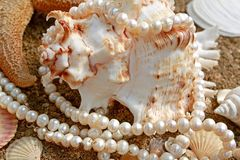 Background with cockleshells and pearls. It is magnificent background with poured pearls and  freakish sea cockleshell Royalty Free Stock Photo