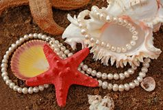 Background with cockleshells and pearls. It is magnificent background with poured pearls and  freakish sea cockleshell Stock Images