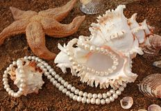 Background with cockleshells and pearls. It is magnificent background with poured pearls and  freakish sea cockleshell Royalty Free Stock Image