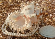 Background with cockleshells and pearls. It is magnificent background with poured pearls and  freakish sea cockleshell Stock Image