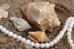 Background with cockleshells and pearls Royalty Free Stock Photos