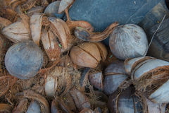 Background of coconut spathe fiber on the ground , texture from nature Royalty Free Stock Photography