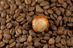 Background of the coffee beans and hazelnut Stock Images