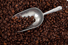 Background of coffee beans with scoop Stock Images