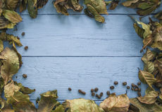 Background of coffee leaves and seeds Royalty Free Stock Photo