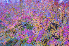 Background color. Autumn colorful leaves. Wallpaper Royalty Free Stock Images