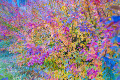 Background color. Autumn colorful leaves. Wallpaper Royalty Free Stock Image