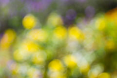 Background of color bokeh Royalty Free Stock Photography