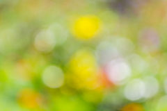 Background of color bokeh Stock Image