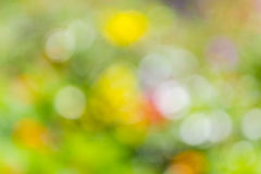 Background of color bokeh Royalty Free Stock Photo