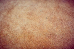 Background color of fur of wild animals shot Royalty Free Stock Photography