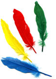 Background with colored feathers Stock Image