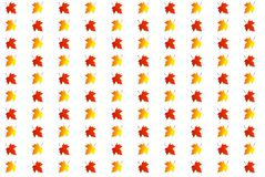 Background of colored maple leaves. On a white background Royalty Free Stock Photos