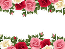 Background with colored roses. Royalty Free Stock Photos
