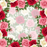Background with colored roses. Royalty Free Stock Photo