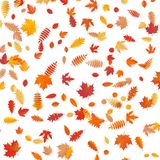 Background of colored wet autumnal maple leaves. EPS 10 vector illustration