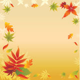 Background with colorful Autumn Leaves Stock Images