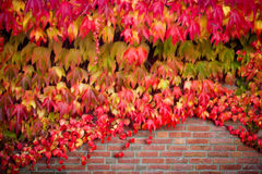 Background of colorful autumn leaves Royalty Free Stock Photography