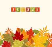 Background With Colorful Autumn Leaves Stock Photography