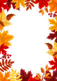 Background with colorful autumn leaves. Vector illustration. Royalty Free Stock Photos