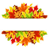 Background with colorful autumn leaves. Vector illustration. Stock Photos