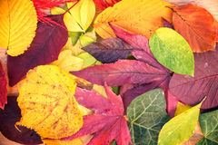 Background of colorful autumnal leaves Stock Image