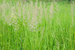 A background with a colorful bright meadow grass. Stock Photos