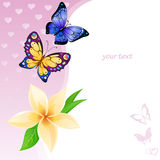 Background of colorful butterflies and flower Royalty Free Stock Photo