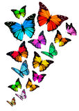 Background with colorful butterflies. Royalty Free Stock Photos