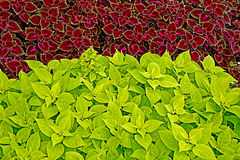 Background with colorful decorative leaves Royalty Free Stock Photos