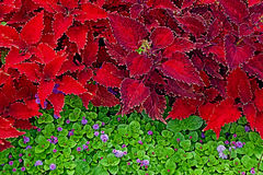 Background with colorful decorative leaves 2 Stock Image