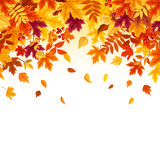 Background with colorful falling autumn leaves. Vector illustration. Royalty Free Stock Image