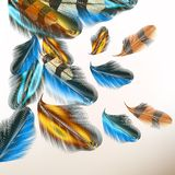 Background with colorful feathers. Vector illustration with colored vector feathers for your design Stock Images