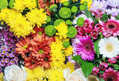 Background of the colorful flowers Stock Photos