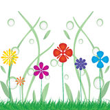 Background with a colorful  flowers . Royalty Free Stock Photos