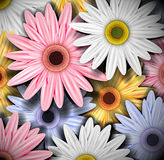Background with colorful gerberas Stock Image