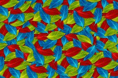 Background of colorful leaf Stock Image