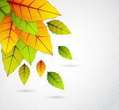 Background with colorful leaves Stock Images