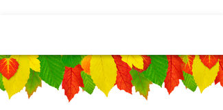 Background with colorful leaves Royalty Free Stock Photo