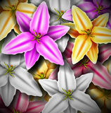 Background with colorful lilies Stock Images