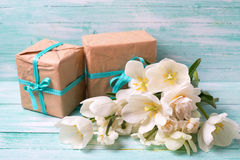 Background with colorful narcissus flowers and boxes  with prese Royalty Free Stock Photos