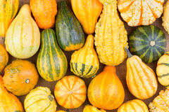Background of colorful ornamental fall gourds Stock Photo